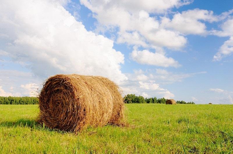 В Кувандыкском районе мужчина поджег 10 тонн сена односельчанке